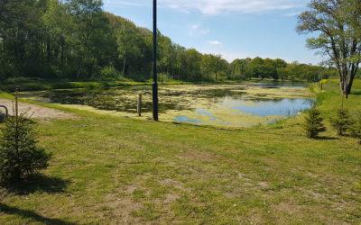 Wuchernde Wasserpflanzen im Angelgewässer bei Tynaarlo
